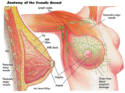 Breast Cancer and TCM
