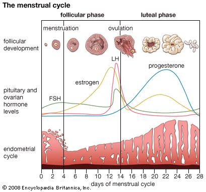 Chinese Medicine for Menstrual Problems