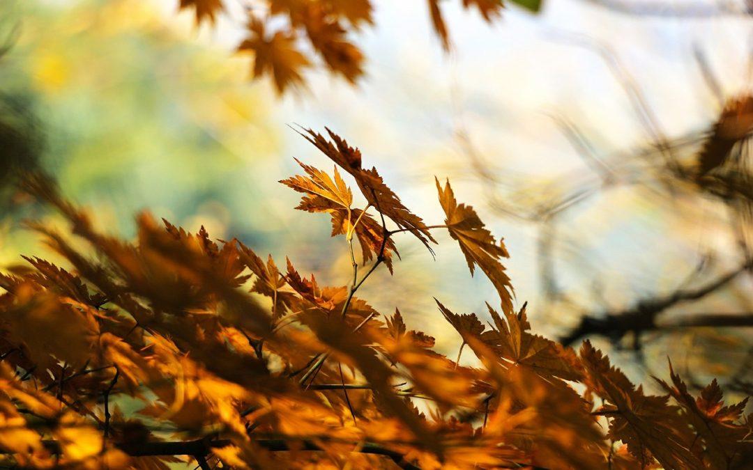 Loving Menopause: The Golden Age